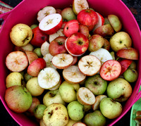 Bishopthorpe Apple Pressing 7-Oct-17